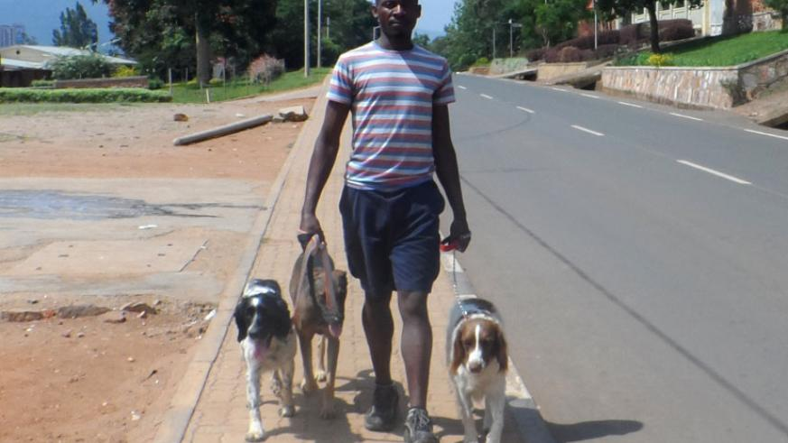 Mwenerukundo walks dogs. He says his clientele base is growing as people continue to appreciate his work. (Donah Mbabazi)