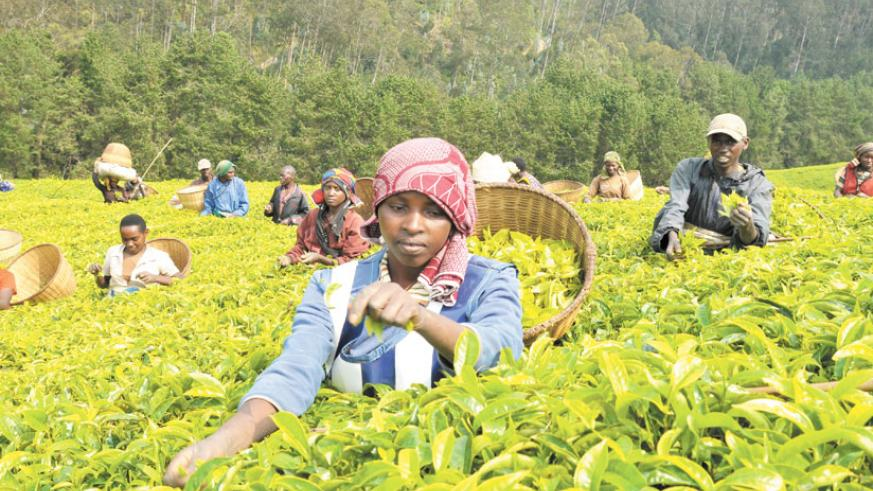 Low global demand will hurt revenue from exports such as tea. (File)