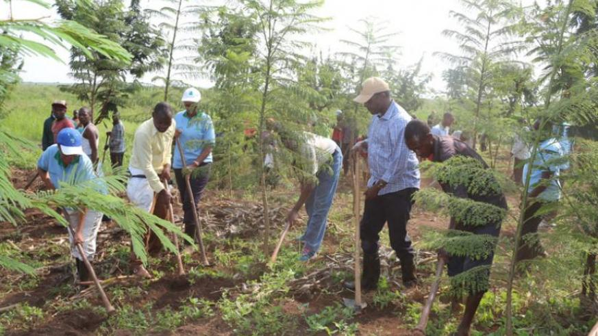 Dr Biruta (2nd right, with cap) joins residents to plant trees in the buffer zone between a neighbourhood and Rweru wetland during the weekend. (Michel Nkurunziza)
