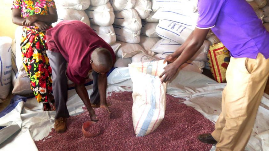 Farmers pick the hybrid beans from Ryamanyoni stores recently. (Stephen Rwembeho)