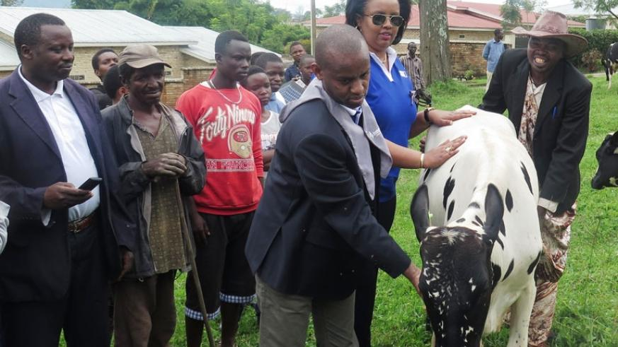 Nsenga (middle) hands over one of the cows on Saturday. (Solomon Asaba)