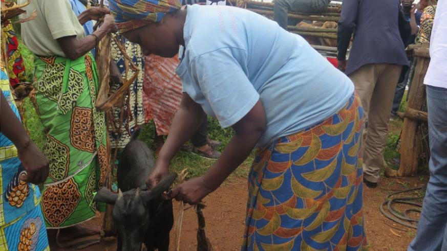 Survivors receive goats from BDF staff on Thursday in Bugesera. (All photos by Michel Nkurunziza)