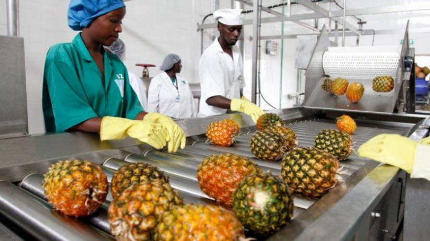 Rwanda is set to start exporting pineapples to Egypt very soon. (File)