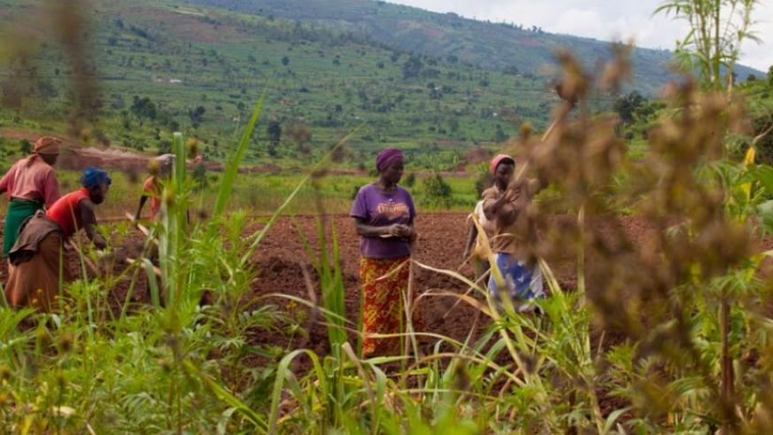 Farmers till their land in Ruryarya in Rwamagana District last year. (Timothy Kisambira)