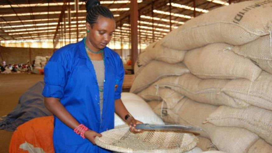Mukantwari inspects sorted coffee beans, above. The dealer with farmers, below. (Peterson Tumwebaze)