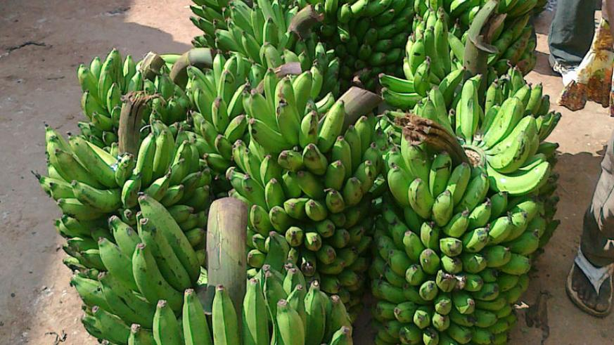 A bunch of bananas goes for up to Rwf8,000 in different city markets. (File)