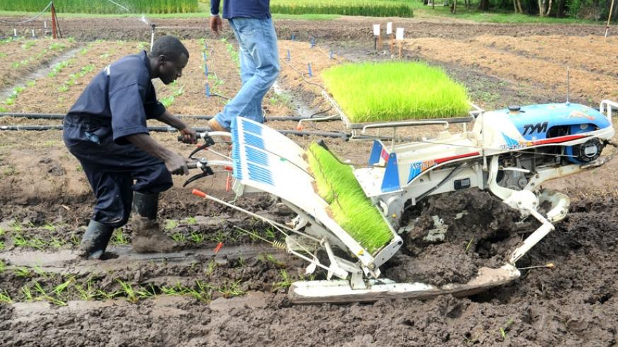 A farmer uses a hand-operated rice planter as a modern way of farming. (File)