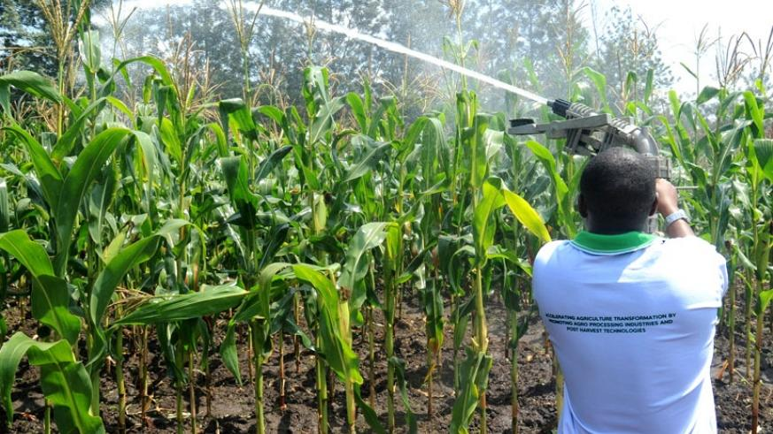 An agriculture technician demonstrates on irrigation. (File)