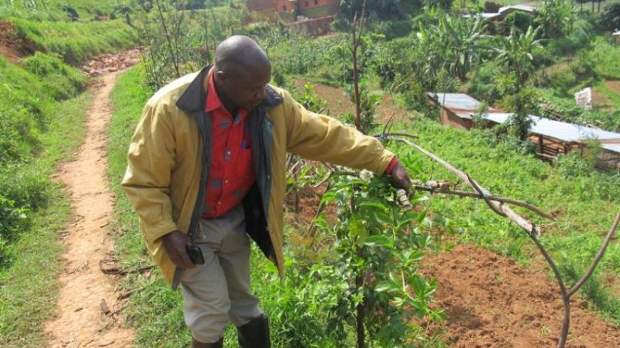 The 49-year- old has also started a passion fruit farming business and looks forward to becoming a successful business man in Gicumbi.