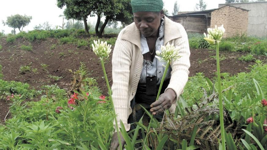 Rwanda will host a regional horticulture industry conference at the end of this month. (File photo)