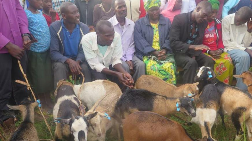 Community psycho social workers, anti- trauma and family disputes based clubs and families from Mbogo and Burega sectors in Rulindo district were given livestock.