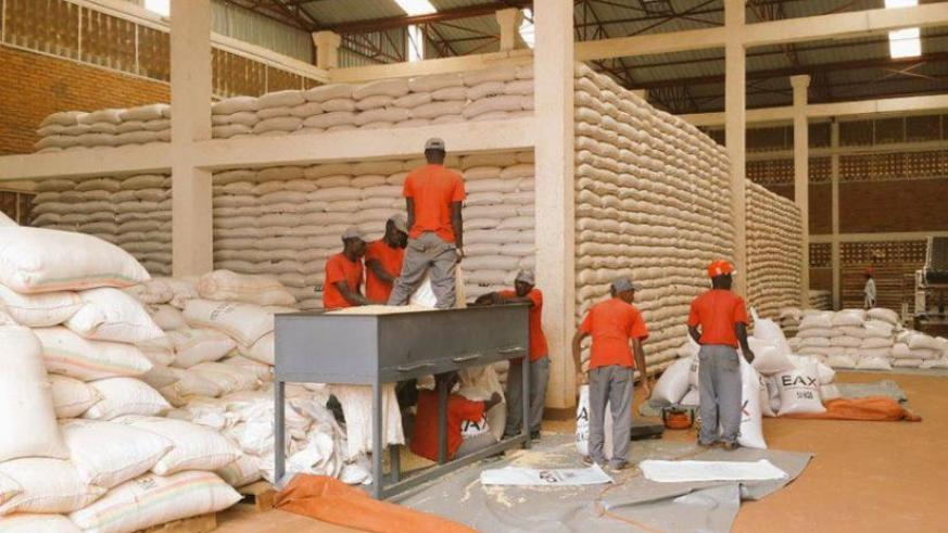 EAX workers sort maize at one of their warehouses. Grain and cereal farmers working with RGCC will soon start selling their produce under the warehouse receipt system. (File)