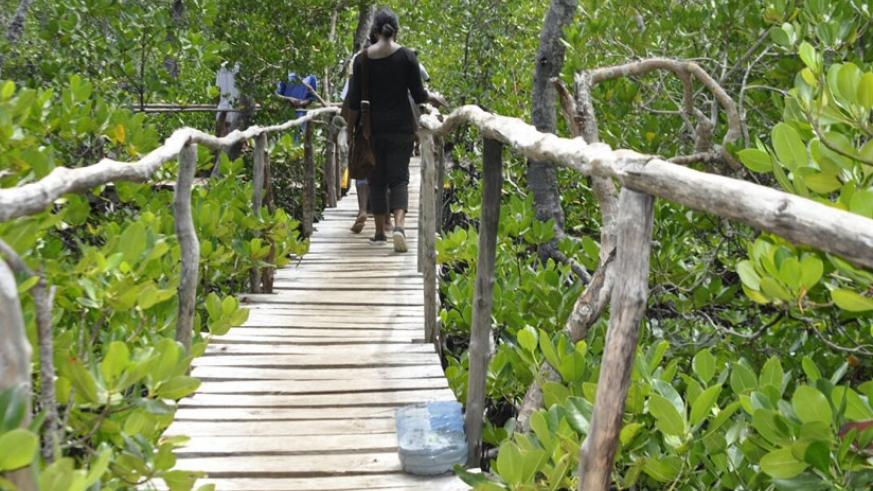 One of the trails developed by the Watamu community using environmental-friendly approaches ensures sustainable tourism development. (S. Idossou)
