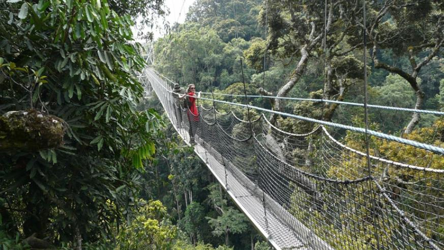 The Nyungwe canopy walk is one of the country's popular tourist attractions. / File.
