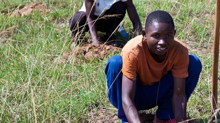 Local residents in Rusororo, Gasabo District plant trees during Umuganda last year. (File)