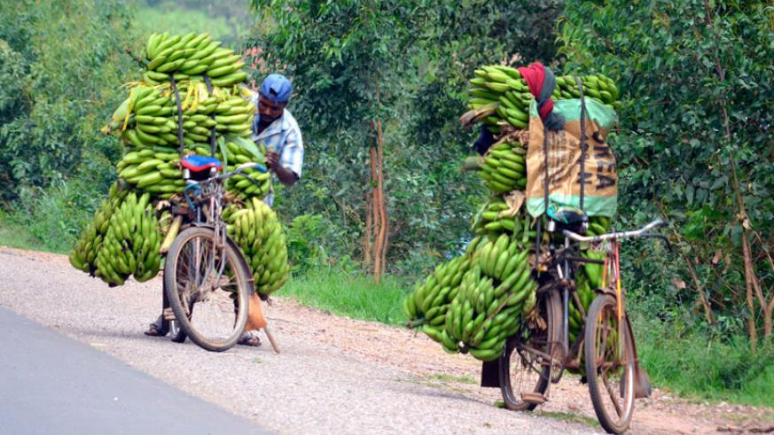 Farmers transporting bananas to market. Nwanze says money Africa spends on food imports would do well to create more and improved jobs in agriculture sector. / IFPRI-Images/Flickr