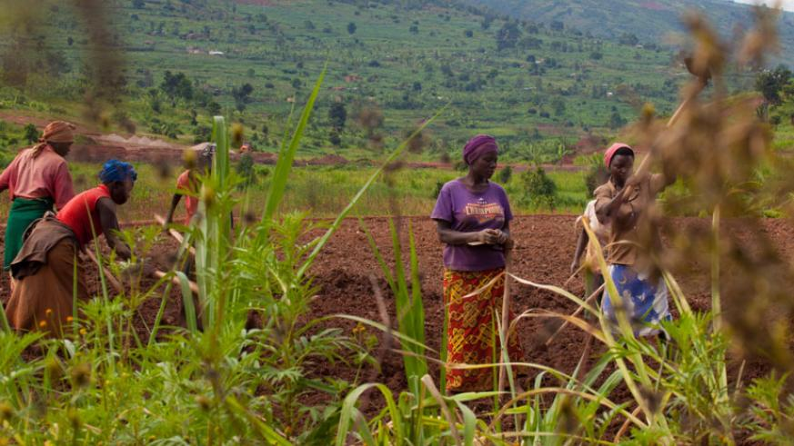 Farmers till their land in Ruryarya in Rwamagana District last year. / File.