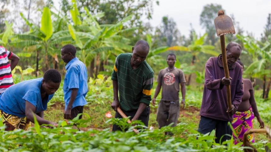 Farmers in Muhanga, Kicukiro District till their land last month. (File)