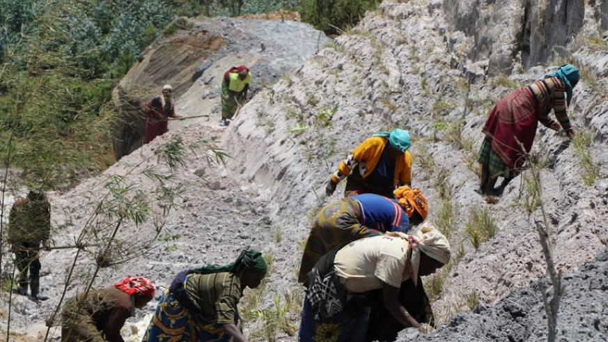 Mukura sector residents help to restore a buffer zone around Gishwati-Mukura National Park. The park has been affected by illegal mining. / File.