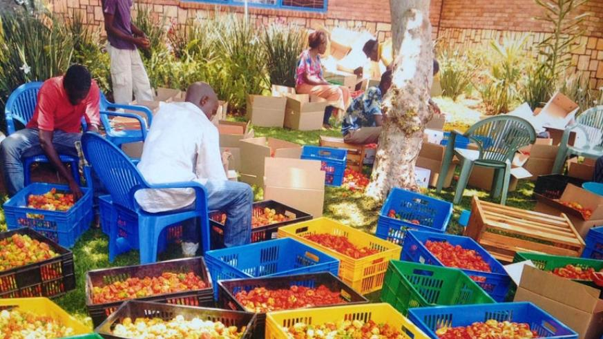 Workers package red pepper at the firm. The entrepreneur deals in various horticulture products, like peppers, bananas (below), flowers, and avocado, as well as handicrafts. (All p....