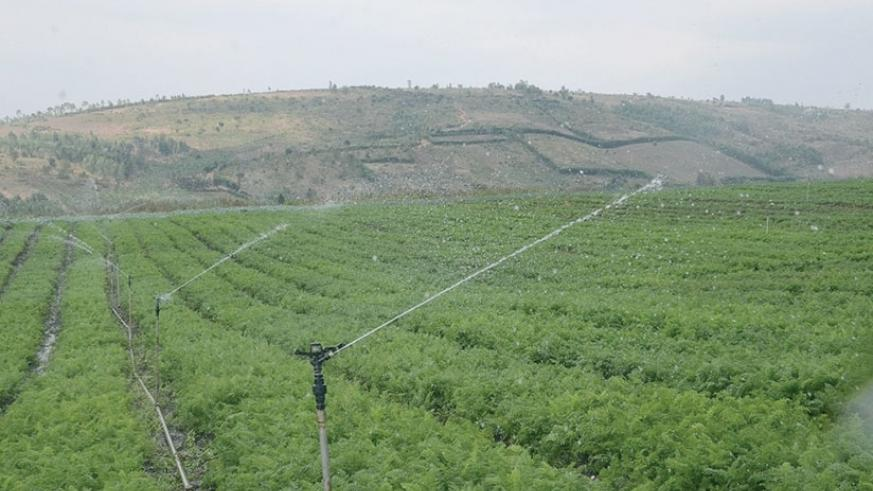 Small Scale Irrigation. / Courtesy.