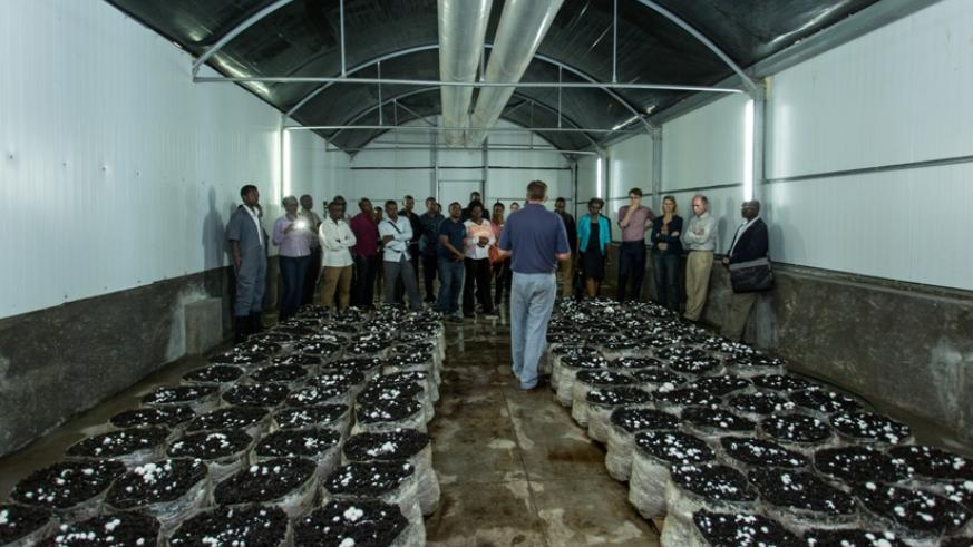 Rwf810m mushroom production plant opens in Musanze District