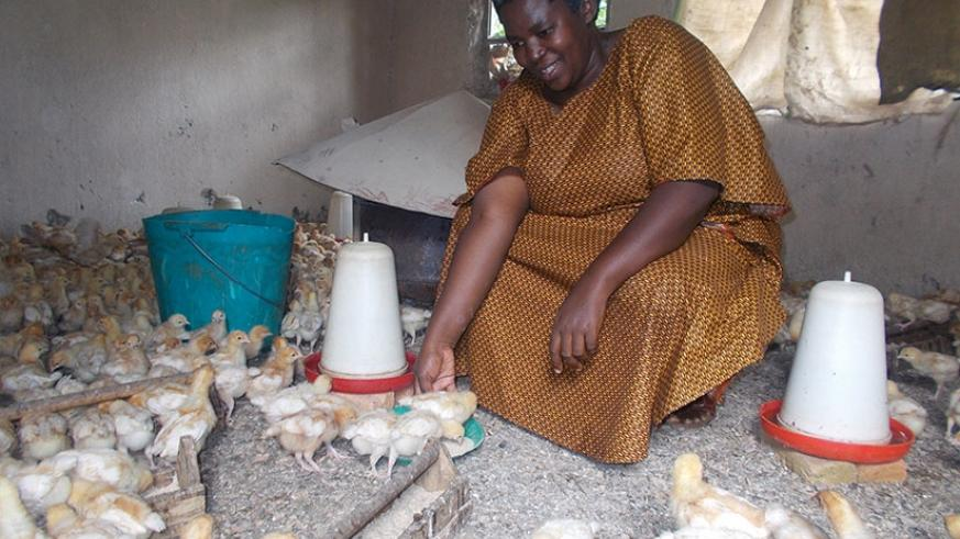 Nyiransabimana finds 'gold' in poultry farming | The New