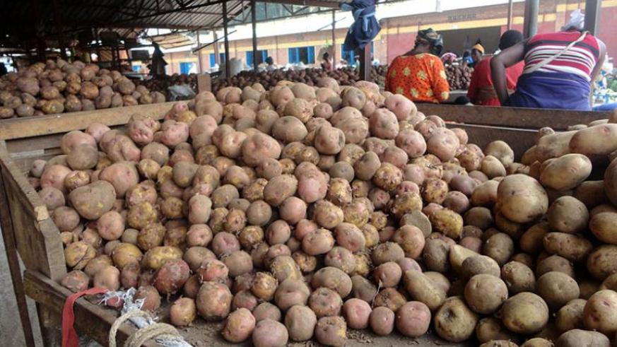 Irish potato farmers across the country continue to bemoan shortage of seeds, a situation RAB has blamed on seed multipliers selling off what they are given to multiply and that th....