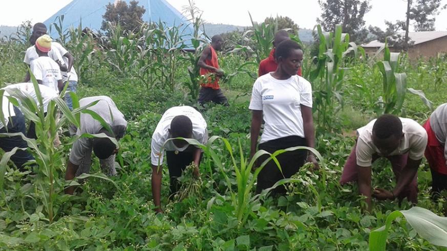 Students on holiday help weed the farm of a vulnerable person in Gatsibo. Kelly Rwamapera.