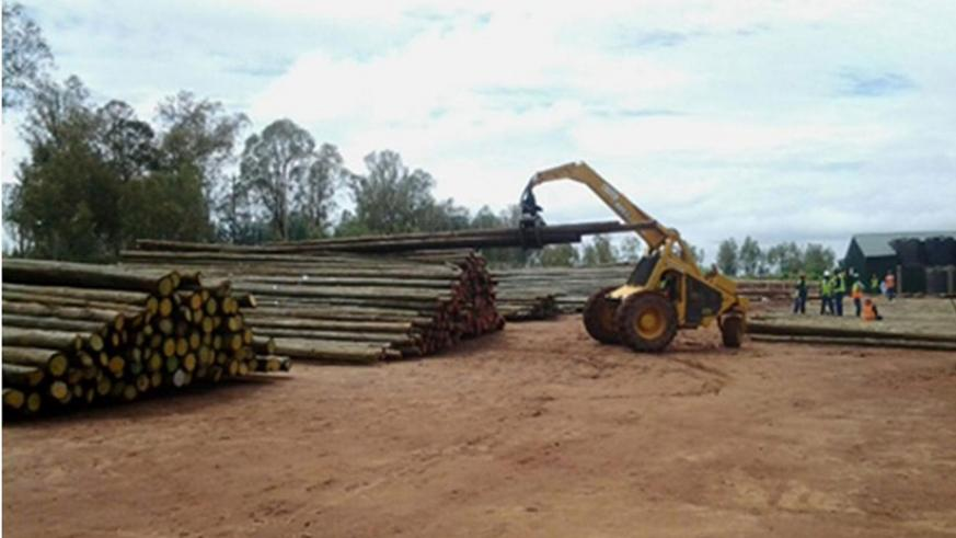 Some of the electricity transmission poles at NFC grounds in Nyanza. Courtesy.