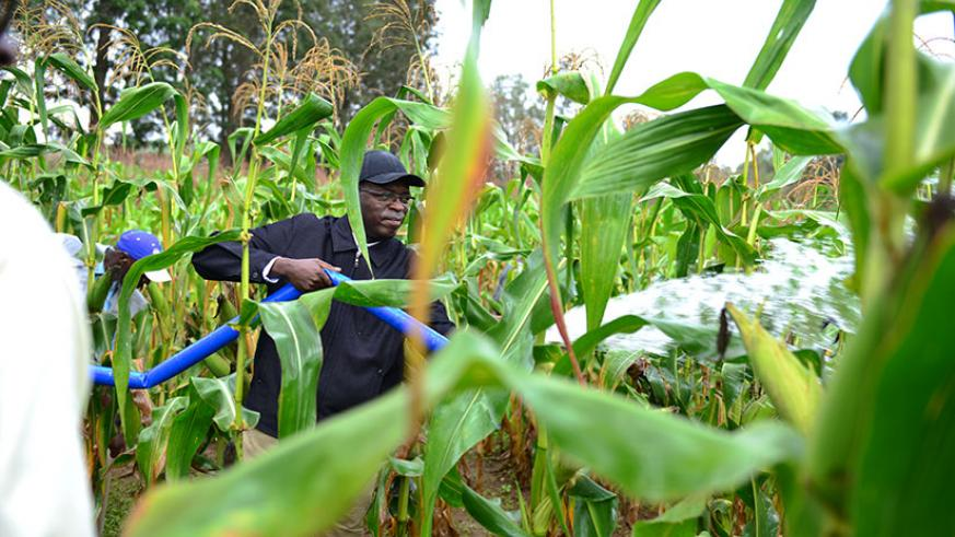 Prime Minister, Anastase Murekezi irrigates crops using diesel high-pressure water pumps during 'Umuganda' community work yesterday in Muhanga district. Courtesy.