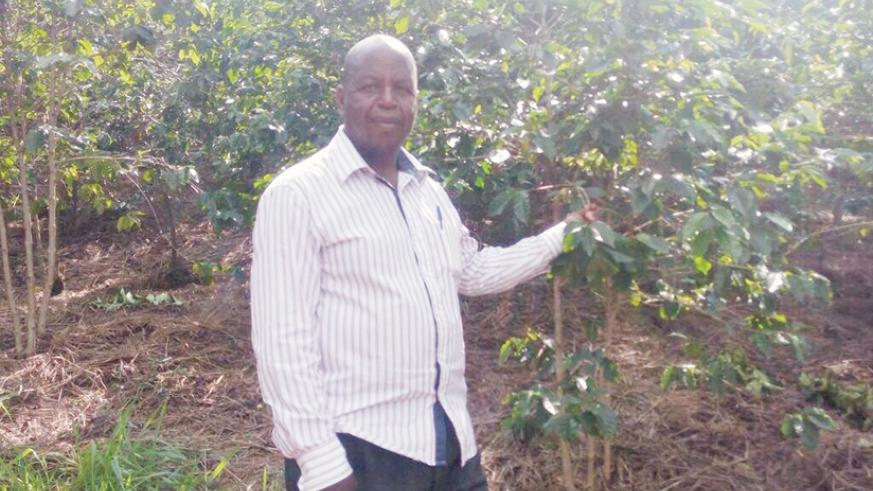 Gasana in his coffee plantation. The farmer started the project as a retirement scheme. / John Mbaraga.