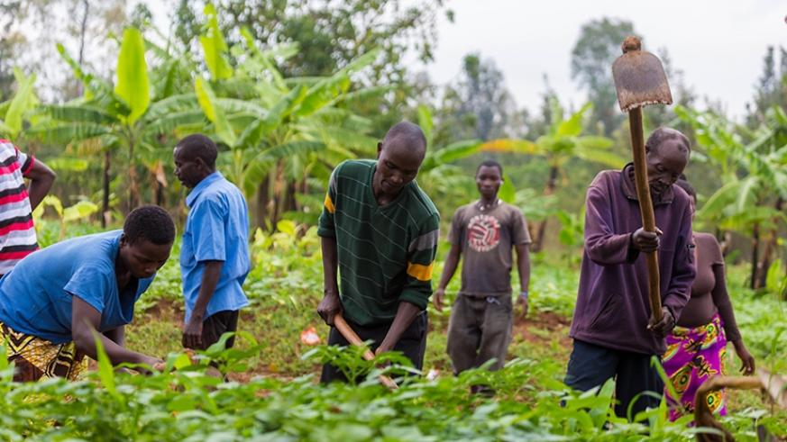 Farmers at work in Kicukiro District. File.