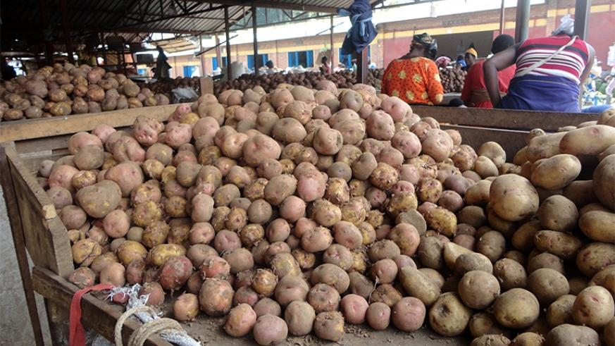 Irish potatoes might be Rwanda's staple food but its seeds are hard to come by for farmers. File.