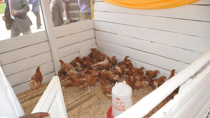 Poultry at last year's Agriculture Expo in Mulindi. File.