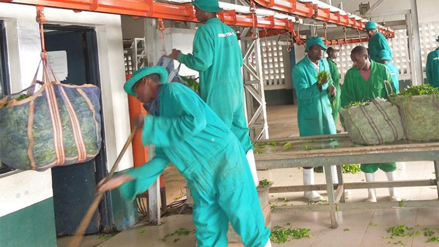 Kitabi Tea Factory employees weigh green tea leaves. Rwanda exports tea to China. / File.
