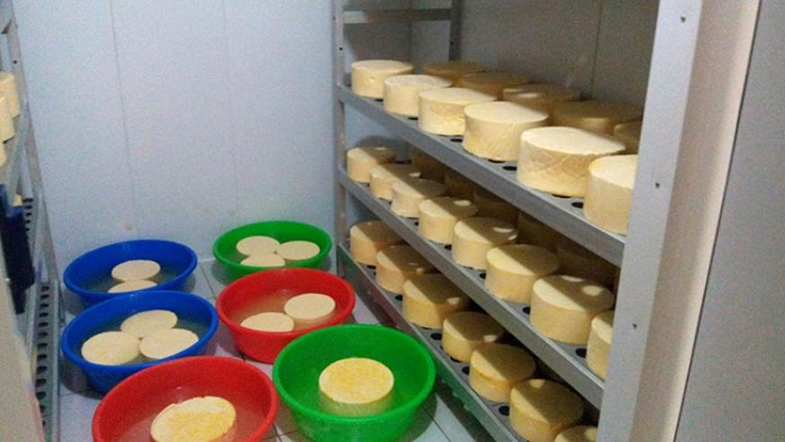 Cheese in maturation stage. Donata Kiiza.