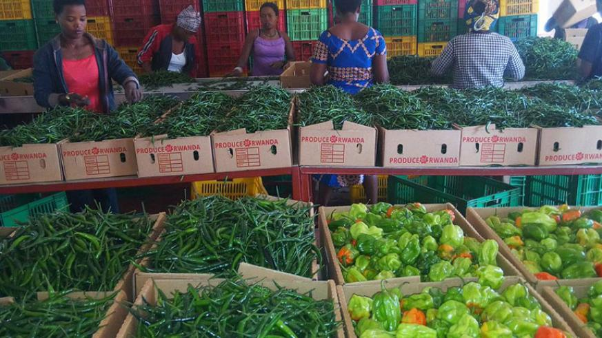Women sort red and green pepper at NAEB before they are shipped to the export market. The Afreximbank trade facilitation loan will support exports, among others. / File.