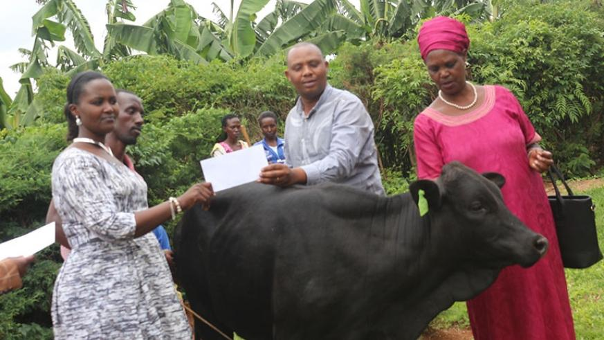 CoK officials hand over a cow to one of the families at Ndera Sector offices, Gasabo District on Wednesday. (Julius Bizimungu)
