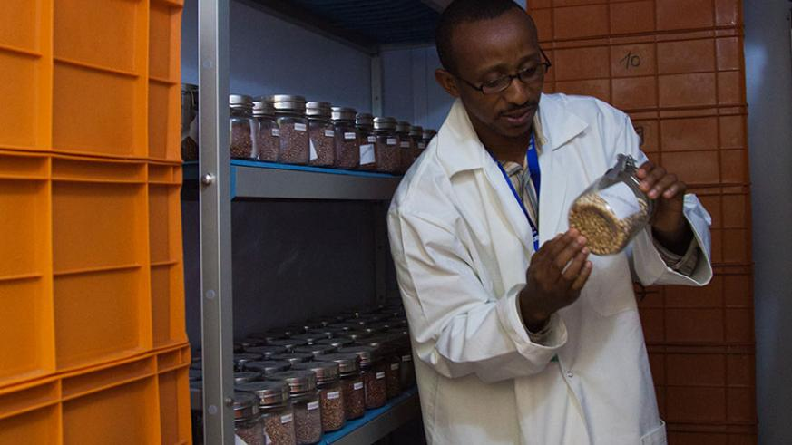 A researcher explains genetic resources conservation process in Genebank at Rubona research center. / Nadege Imbabazi