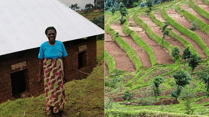 Nyirabarera in front of her house that is under construction. The farmer has embraced hillside terracing (right). She grows maize, Irish potatoes and beans. / Peterson Tumwebaze