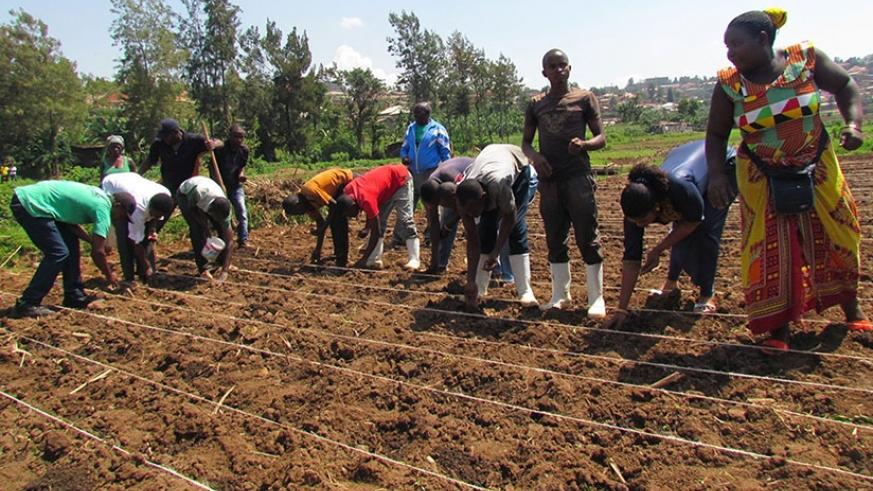 Farmers plant seeds. Agriculture mechanisation is still low in Rwanda. (Courtesy)