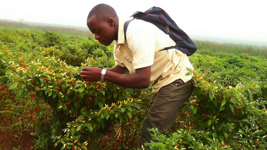 The programme seeks to attract more youth into farming and boost job-creation. / Courtesy