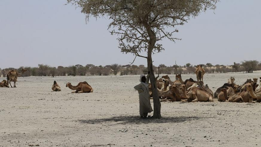 The Sahel has been battered by drought due to climate chang. Net photo.