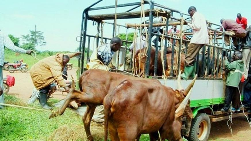 Movement of cattle from Nyagatare has been banned. (Net)