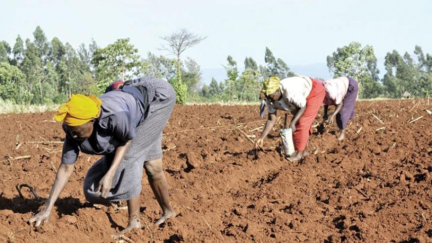 IMF has partly premised Rwanda's growth prospect for 2017/18 on favourable rain that will see agriculture sector rebound. / Internet photo