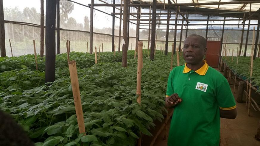 Nzabarinda explains Irish potato seed production and multiplication process, while  in his greenhouse in Musanze District on Tuesday. Emmanuel Ntirenganya.
