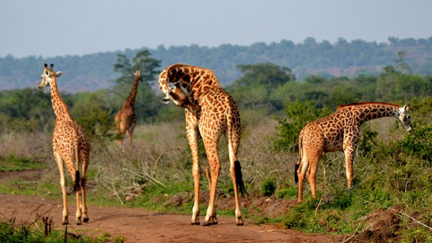 Rwandans are encouraged to visit their own tourist attractions like the Akagera National Park.