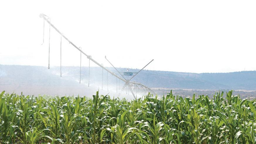 Kagitumba Irrigation Scheme in Nyagatare District. The private sector in the east has been called upon to invest in projects like this irrigation. / Kelly Rwamapera.
