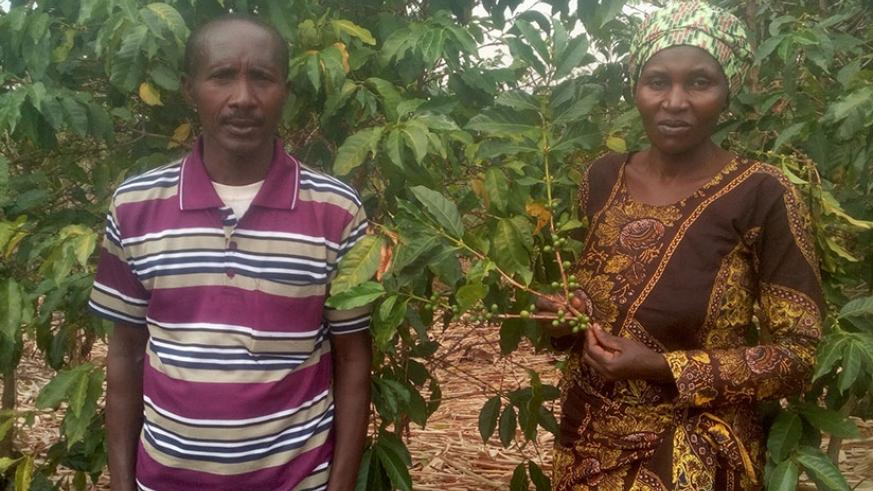 The enterprising farmer and her husband in their coffee plantation. / Remy Niyingize.